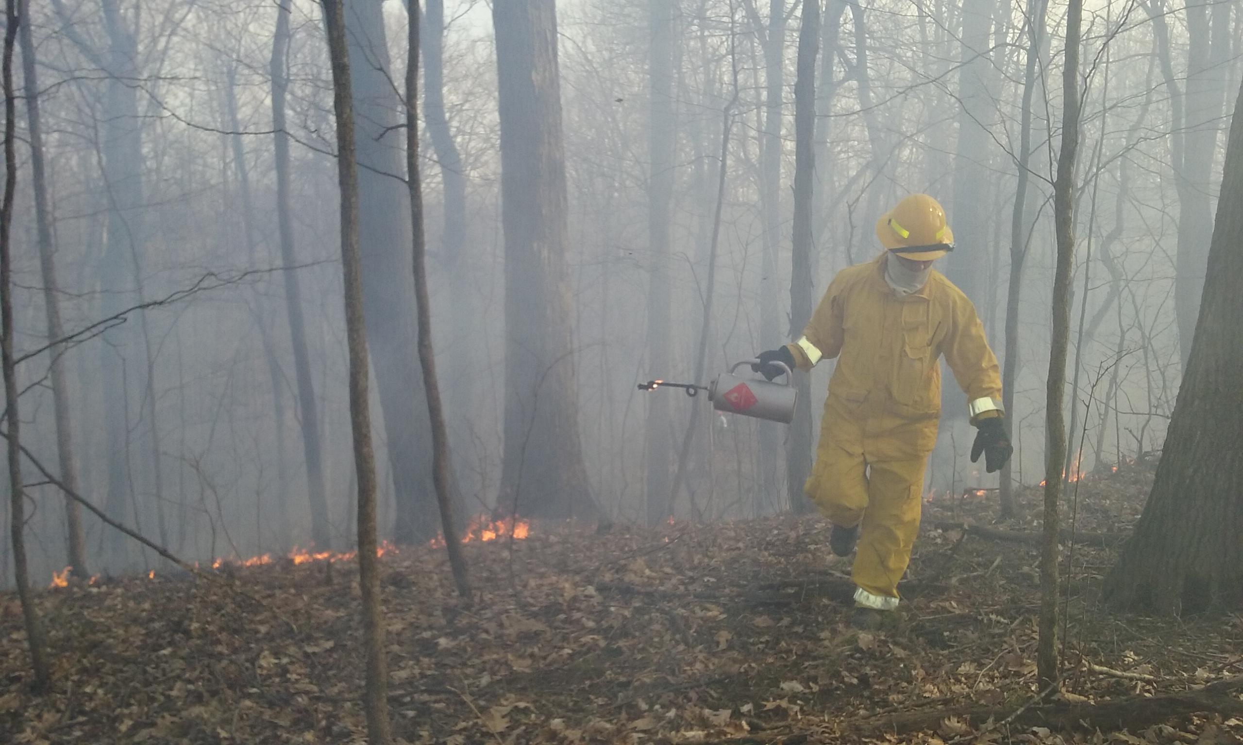 Fuel reduction/habitat burn