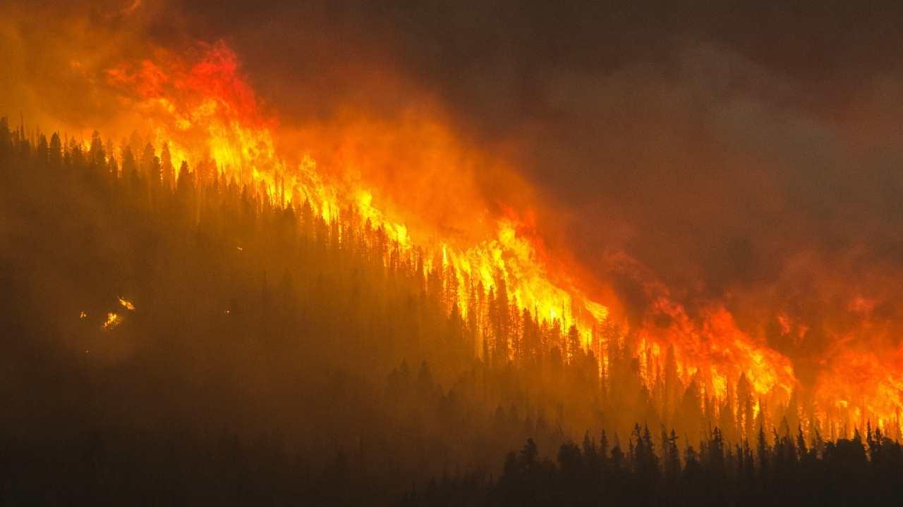 Wildfire Webinars